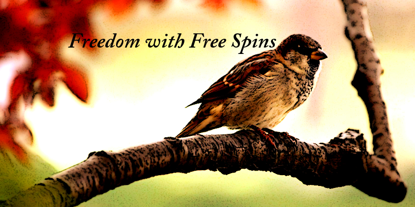 Microgaming Free Spins Bonus to Try